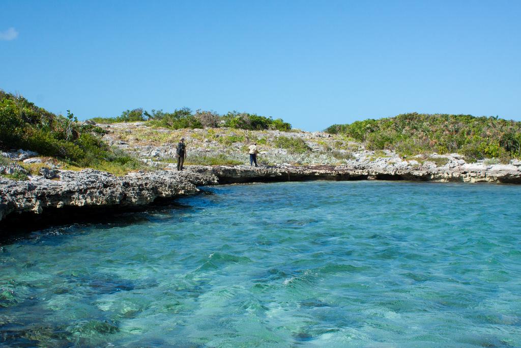 Island Conservation sur Allen Cay 150