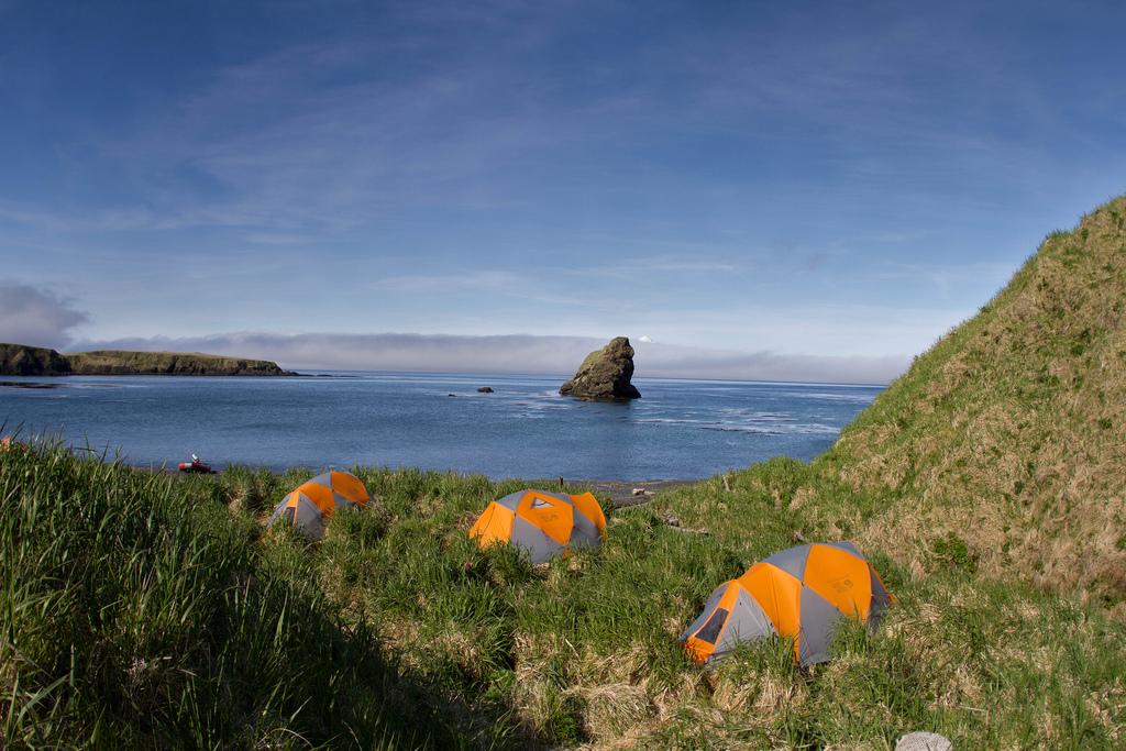 Une île aux oiseaux en Alaska 159