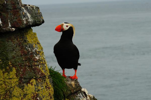 Une île aux oiseaux en Alaska 160