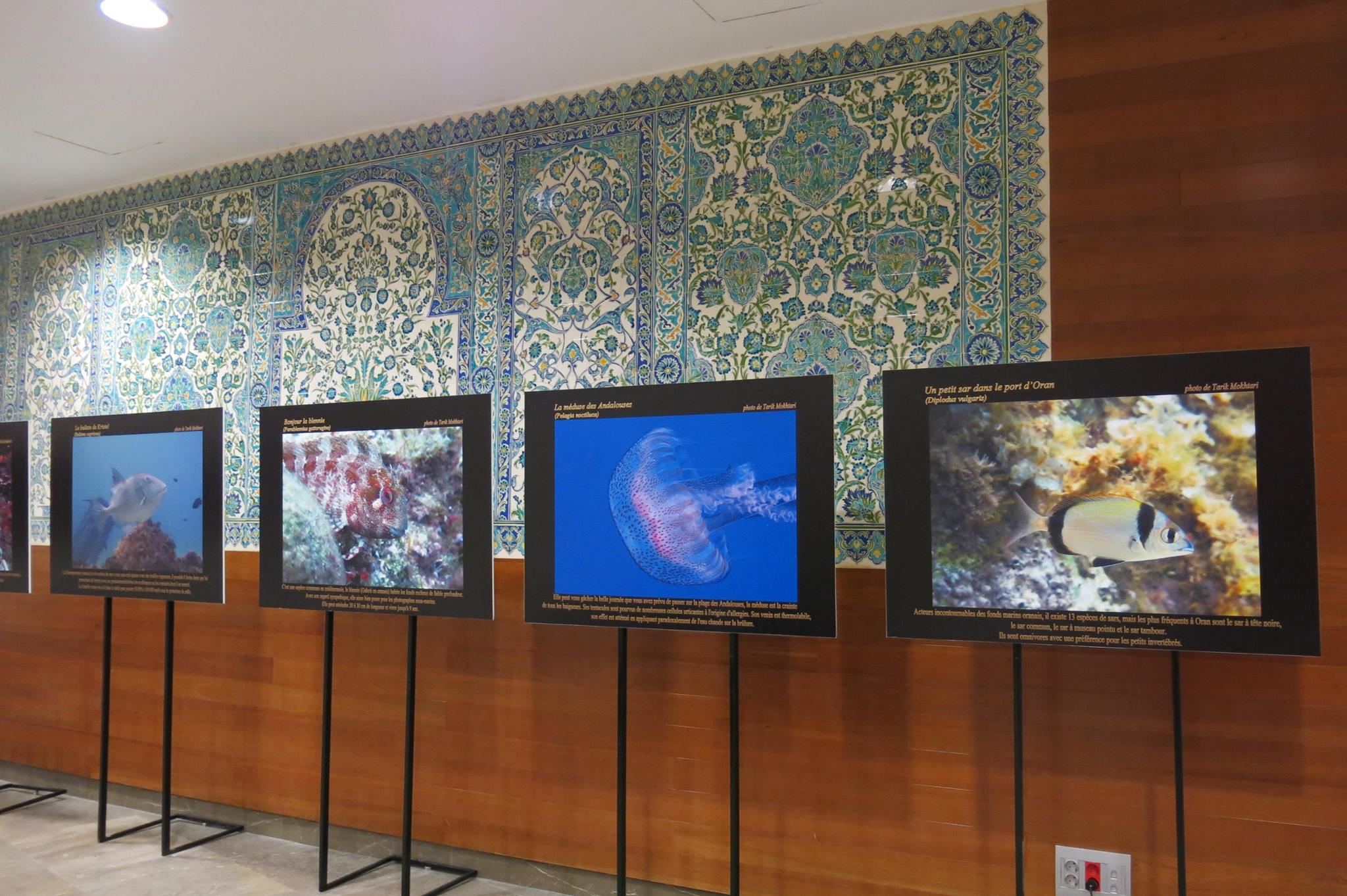 L'Algérie s'expose à Marseille - photographies sous-marines 165