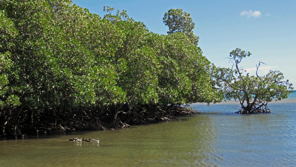 Des enfants à la découverte de leurs mangroves à Diego Suarez, Madagascar 227