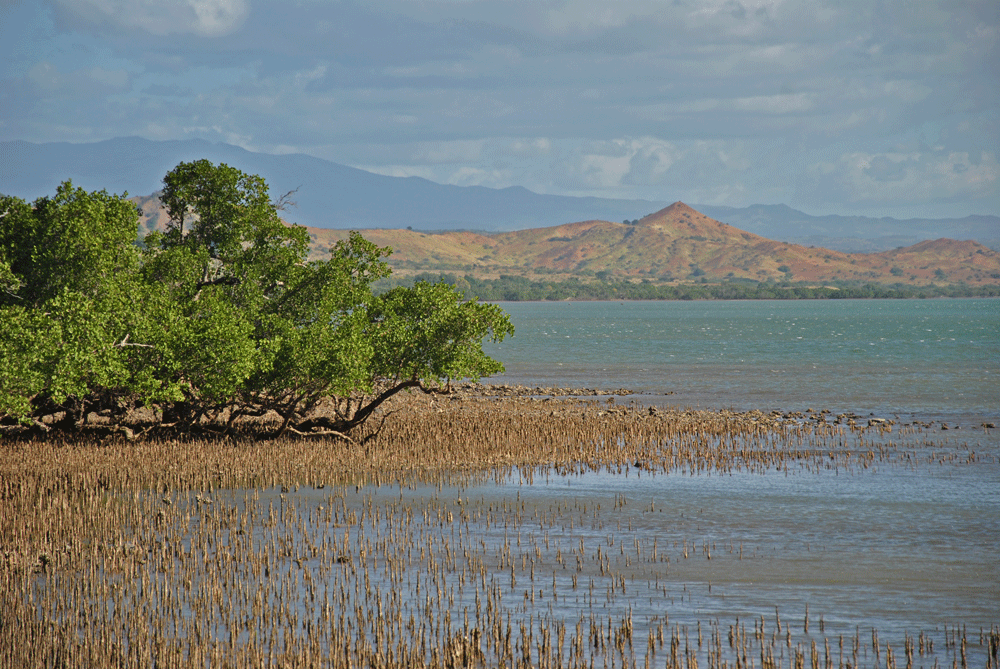 Des enfants à la découverte de leurs mangroves à Diego Suarez, Madagascar