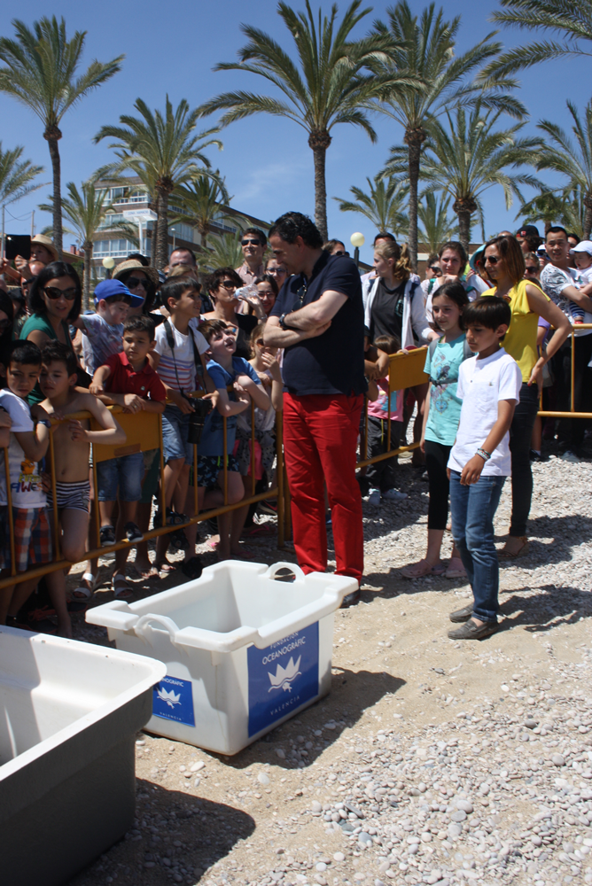 Reintroduction de tortues marines à Alfas del Pi !  286