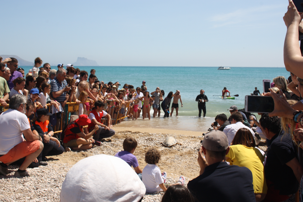 Reintroduction de tortues marines à Alfas del Pi !  289