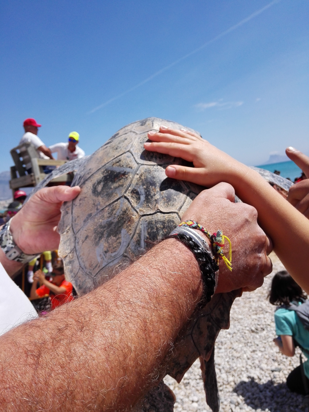 Reintroduction de tortues marines à Alfas del Pi !  292