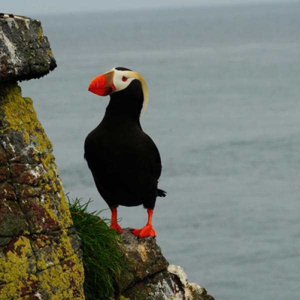 Une île aux oiseaux en Alaska