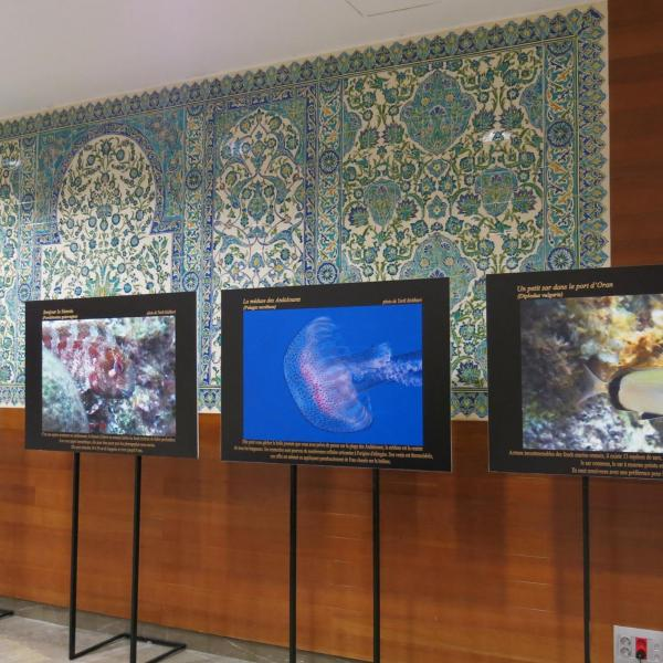 L'Algérie s'expose à Marseille - photographies sous-marines