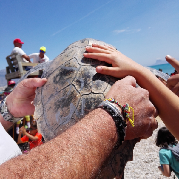Reintroduction de tortues marines à Alfas del Pi !